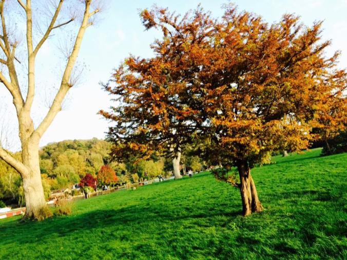 henley_autumn